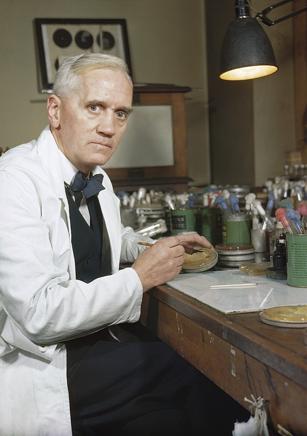 Sir Alexander Fleming, in his laboratory at St Mary's, Paddington, London,1943 (Imperial War Museum: TR 1468)