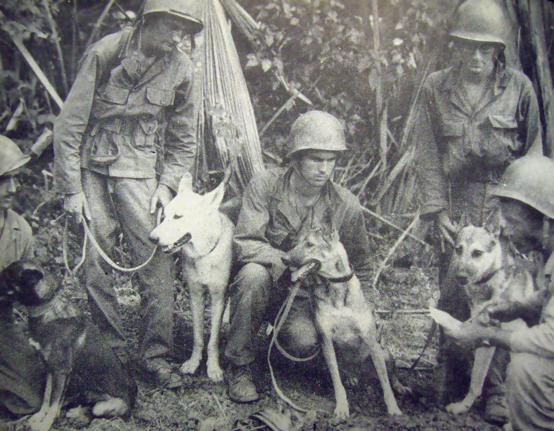 One of the first scout dog patrols to be used on Luzon in WWII. Briefing prior to a patrol (US Army photo)