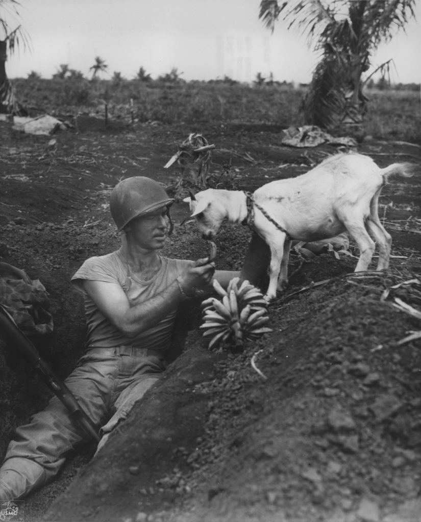 US Marine First Sgt. Neil Shober feeding bananas to a native goat, Saipan, Mariana Islands, June 1944 (US Marine Corps photo)
